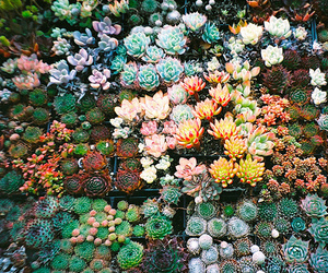 flowers, cactus, and nature image
