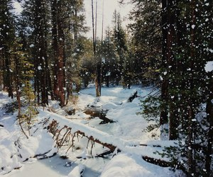 snow, forest. winter, and sun. photo image