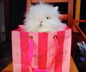 bag, pink, and white image