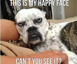 dog, face, and funny image