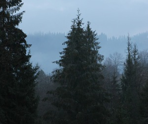 black, teeneger, and forest image