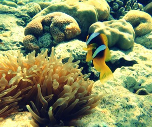 coral, nemo, and water image