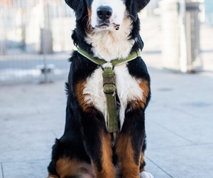 Image by The Dogist