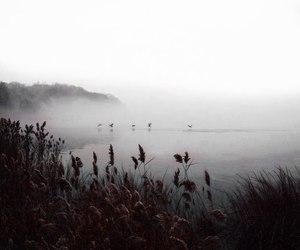 autumn, dark, and dreamy image