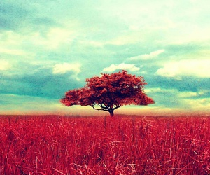 tree, red, and sky image