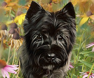 personalized, custom dog art, and cairn terrier image