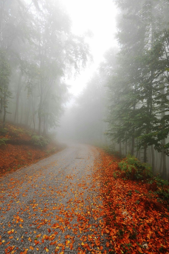 autumn, fall, and foggy image
