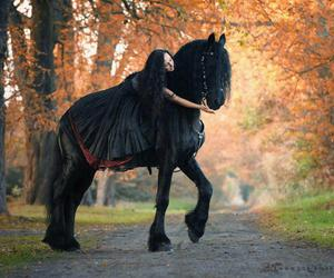 horse and black image
