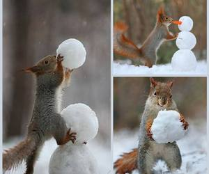 cute animals, squirrels, and baby animals image