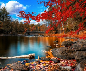 autumn, nature, and fall image