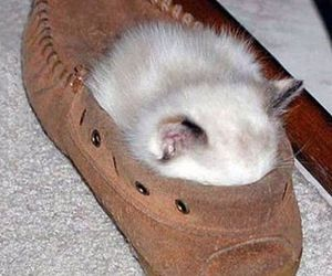 cat and shoe image