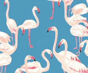 wallpaper, blue, and flamingo image