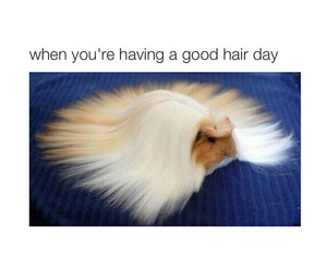funny, hair, and lol image