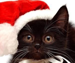 christmas, cat, and kitten image