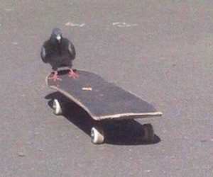 pigeon, skate, and skateboard image