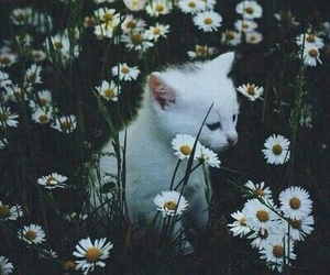 white, cat, and flowers image