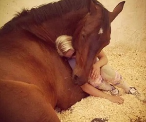 horse and love image
