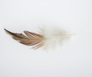 feather, white, and brown image