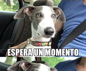dog, frases, and humor image