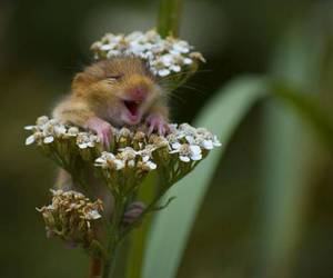 adorable, happy, and nature image