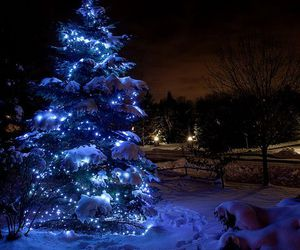 amazing, christmas, and colors image
