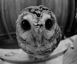 owl, animal, and photography image