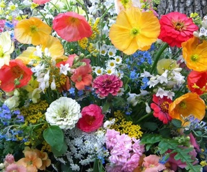 flowers, plants, and spring image