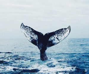 blue, freedom, and whale image