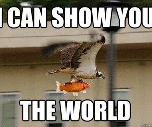 funny, meme, and bird image
