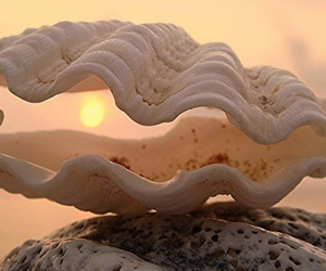 mermaid and shell image