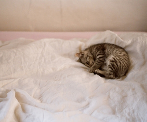 animal, soft, and bed image