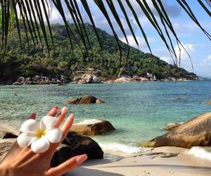 exotic, travel, and tropical image