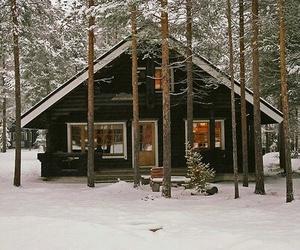 nature, random, and winter image