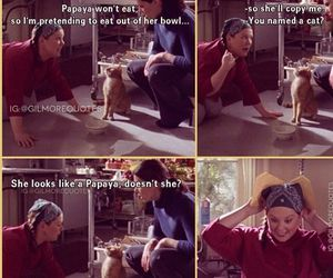 cat, funny, and gilmore girls image