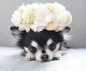 dog, animals, and flowers image
