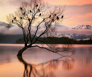 nature, landscape, and tree image