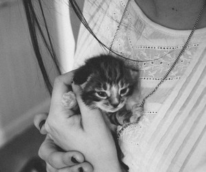 b&w, cat, and girl image