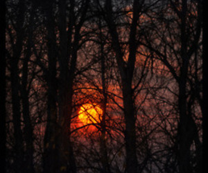 forest, dark, and sunset image
