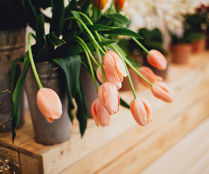 flowers, tulips, and vintage image