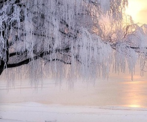 beautiful, ice, and tree image
