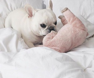 bulldog, french, and dog image