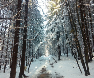 beautiful, cold, and forest image