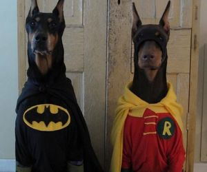 dog, batman, and robin image