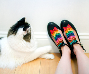 shoes, cat, and bow image