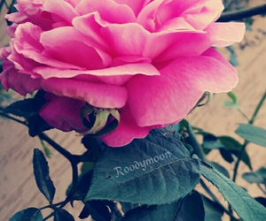 flower, flowers, and rose image