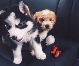 dogs, cute, and puppies image
