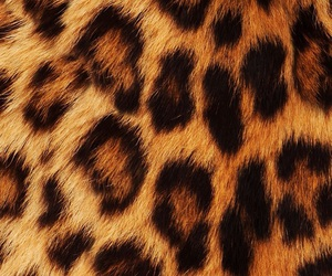wallpaper, background, and leopard image