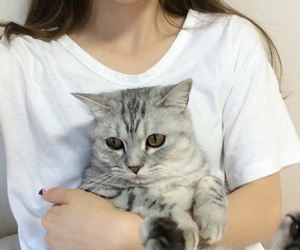 cat, girl, and tumblr image