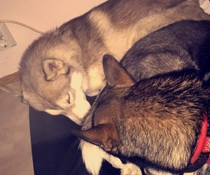 arctic, dogs, and sleep image