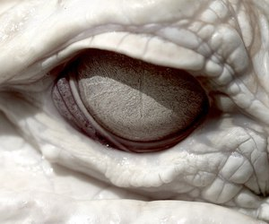 eye, white, and albino image